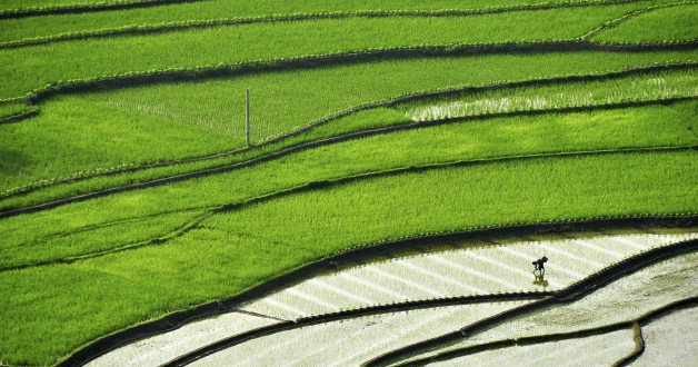 business-future-of-agriculture